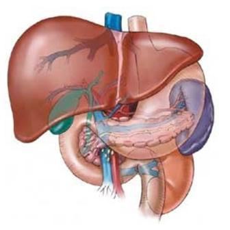 Teoría de los Órganos y Vísceras